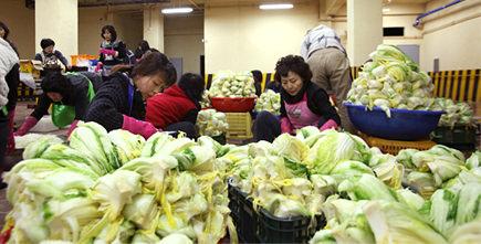 越冬泡菜的制作过程